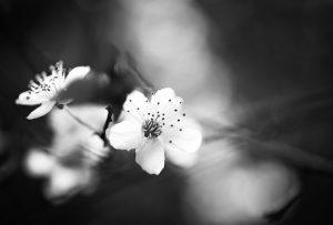 Frühlingskuss