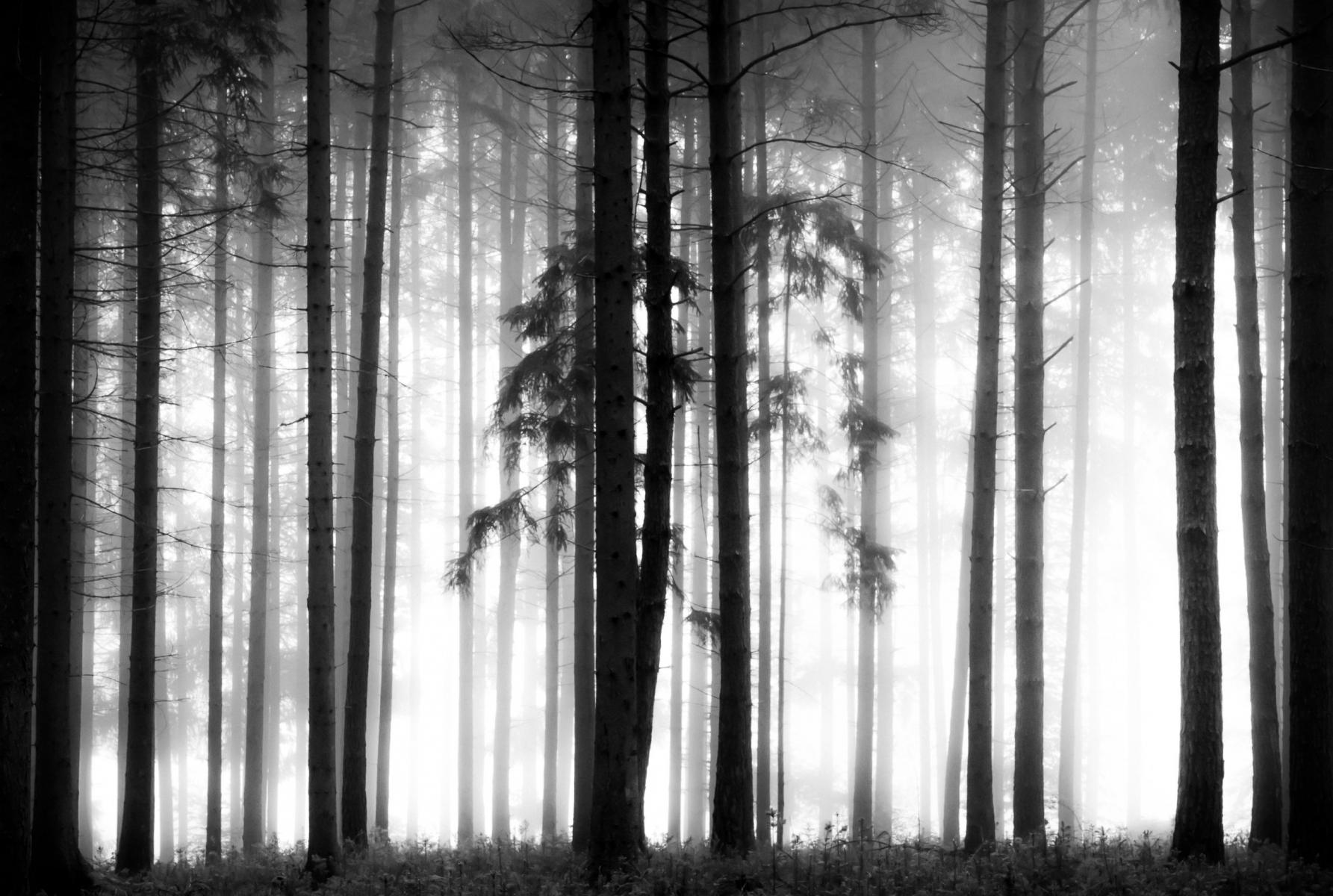 Der Atem des Waldes