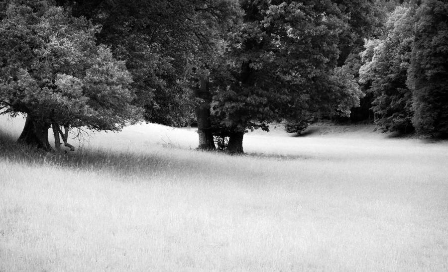 Wilde Bäume