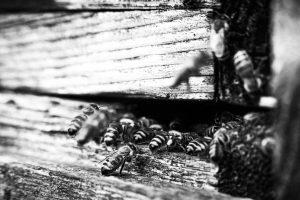 Bienen-Sommer